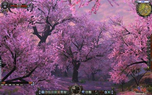 图6-浪漫樱花